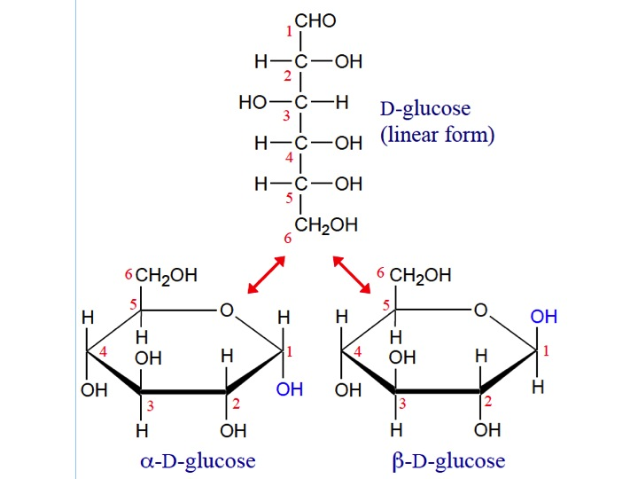 D Galactose Fischer Fischer and Haworth pr...